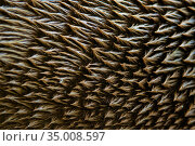 European otters (Lutra lutra) close up of fur. Стоковое фото, фотограф Edwin Giesbers / Nature Picture Library / Фотобанк Лори