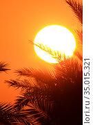 Sunrise in palm leaves in red sky tones. Стоковое фото, фотограф Олег Елагин / Фотобанк Лори