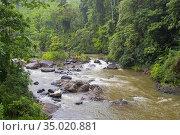 Sinharaja National Park Rain Forest, Sinharaja Forest Reserve, World... Стоковое фото, фотограф Alberto Carrera Anaya / easy Fotostock / Фотобанк Лори