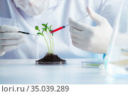 Biotechnology concept with scientist in lab. Стоковое фото, фотограф Elnur / Фотобанк Лори