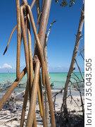 Damaged mangrove trees on the beach, Cayo Levisa, Pinar del Río Province... Стоковое фото, фотограф Andre Maslennikov / age Fotostock / Фотобанк Лори