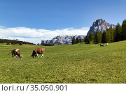 Seiser Alm (Alpe di Siusi). Valgardena Italy. Panorama view with ... Стоковое фото, фотограф Marco Brivio / age Fotostock / Фотобанк Лори