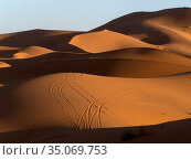 Tyre tracks on sand dunes of Erg Chebbi, shadows in morning light... Стоковое фото, фотограф Pal Hermansen / Nature Picture Library / Фотобанк Лори