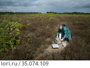 Researcher emptying Ground beetles (Carabidae) from pitfall trap. Long-term monitoring has revealed a 72 percent reduction in Ground beetle numbers in... Стоковое фото, фотограф Edwin Giesbers / Nature Picture Library / Фотобанк Лори