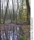 Липитинский ручей. Природно-исторический парк «Измайлово» (2020 год). Редакционное фото, фотограф Мария Кылосова / Фотобанк Лори