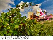 Vineyards, Marques de Riscal Hotel, designed by architect Frank Owen... Стоковое фото, фотограф Javier Larrea / age Fotostock / Фотобанк Лори
