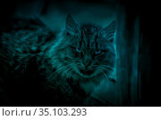 Scary mystical paranormal horror scary gaze eyes cat ghost in a strange otherworldly moonlight and eerie magical shadows. Стоковое фото, фотограф Светлана Евграфова / Фотобанк Лори