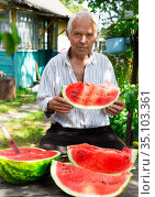 gray haired old man eating a huge ripe watermelon. Стоковое фото, фотограф Татьяна Яцевич / Фотобанк Лори