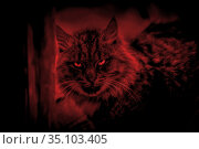 Scary mystical paranormal horror gaze cat eyes ghost in a strange otherworldly dangerous red light and eerie magical shadows. Стоковое фото, фотограф Светлана Евграфова / Фотобанк Лори