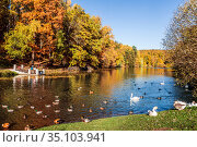 Autumn pond with floating ducks, geese and swans. Moscow, Russia (2018 год). Стоковое фото, фотограф Наталья Волкова / Фотобанк Лори