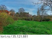 Parkanlage, Wiese, Wildblumen. Стоковое фото, фотограф Bernd J. W. Fiedler / age Fotostock / Фотобанк Лори