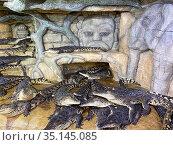 """Нильские крокодилы (Crocodylus niloticus). """"Крокодиляриум"""". Ялта. Редакционное фото, фотограф Мария Кылосова / Фотобанк Лори"""
