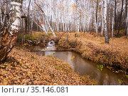 Sokolka river in the autumn birch forest in the Saratov region Novoburassky district Russia. Стоковое фото, фотограф Светлана Евграфова / Фотобанк Лори