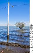 Relaxing lake Nicaragua landscape with tree. Nicaragua, Central America. Стоковое фото, фотограф Николай Коржов / Фотобанк Лори