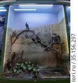 """Экспозиция """"Природа Удмуртии"""". Птицы. Стоковое фото, фотограф Сагирова Алсу / Фотобанк Лори"""
