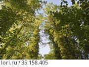 Foliage, Eure-et-Loir department, Centre-Val-de-Loire region, France... Стоковое фото, фотограф Christian Goupi / age Fotostock / Фотобанк Лори