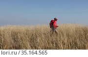 Female tourist with a backpack and Nordic walking sticks walking through a field of yellow grass in the boundless steppes of the golden autumn wilderness. Стоковое видео, видеограф Алексей Кузнецов / Фотобанк Лори