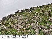 Вулканическая гора Жербье-де-Жонк (Mont Gerbier de Jonc) - природная достопримечательность Франции расположенная в Центральном горном массиве (le Massif Central) (коммуна Сен-Мартиаль; департамент Ардеш Provence-Alpes) Стоковое фото, фотограф Вера Смолянинова / Фотобанк Лори