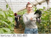 Woman horticulturist with harvested cucumbers. Стоковое фото, фотограф Яков Филимонов / Фотобанк Лори