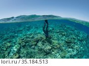Biologist Katie Chartrand from James Cook University free diving in shallow coral reef. Part of Coral IVF team restoring damaged coral reef through rearing... Стоковое фото, фотограф Jurgen Freund / Nature Picture Library / Фотобанк Лори