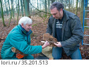 Father and son, Fred and Henk-Jan Koning measuring Tawny owl (Stix aluco) wing during ringing session. Part of a 60 year long-term study to monitor raptor... Стоковое фото, фотограф Edwin Giesbers / Nature Picture Library / Фотобанк Лори
