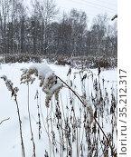 Золотарник, засыпанный снегом в Измайловском парке, Москва. Стоковое фото, фотограф Мария Кылосова / Фотобанк Лори