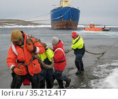 Team pulling the heavy mooring lines of the Amderma in Mawson Harbour, Antarctica February 2009. Стоковое фото, фотограф Fred Olivier / Nature Picture Library / Фотобанк Лори