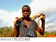 Girl holding a leucistic Ball or Royal python (Python regius) around her shoulders, Togo. Стоковое фото, фотограф Daniel Heuclin / Nature Picture Library / Фотобанк Лори