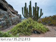 Humboldt penguin (Spheniscus humboldti), nesting habitat on desert island, Tilgo Island, La Serena, Humboldt Archipelago, Chile. Стоковое фото, фотограф Tui De Roy / Nature Picture Library / Фотобанк Лори