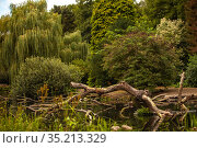 Picturesque landscape with a small pond and green trees. Стоковое фото, фотограф Restyler Viacheslav / Фотобанк Лори