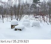 Пеньки, засыпанные снегом в Измайловском парке, Москва. Стоковое фото, фотограф Мария Кылосова / Фотобанк Лори
