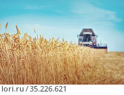Combine harvesting wheat on sunny summer day. Стоковое фото, фотограф Игорь Струков / Фотобанк Лори
