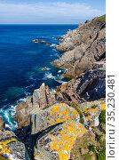 Cliffs of Lundy Island, Devon, England, United Kingdom. British Isles, June. Стоковое фото, фотограф Alex Mustard / Nature Picture Library / Фотобанк Лори