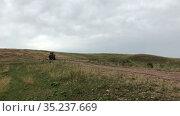 Tractor with hay bales in wagon driving through an agricultural field after harvesting grain crops. Haymaking. Редакционное видео, видеограф Кекяляйнен Андрей / Фотобанк Лори