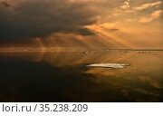 RF - Floating iceberg, in golden light, Svalbard, Norway. Стоковое фото, фотограф Andy Rouse / Nature Picture Library / Фотобанк Лори