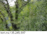 Raindrops on glass on a background of green trees. Стоковое фото, фотограф Юрий Бизгаймер / Фотобанк Лори