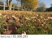 Autumn leaves, English countrside road. Стоковое фото, фотограф Dariusz Gora / easy Fotostock / Фотобанк Лори
