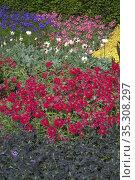 Flower bed in blooming garden, Norfolk, UK. Стоковое фото, фотограф Dariusz Gora / easy Fotostock / Фотобанк Лори