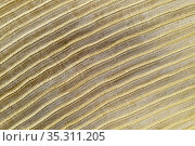Abstract patterns in cornfield after wheat harvest. In the Campiña... Стоковое фото, фотограф Thomas Dressler / age Fotostock / Фотобанк Лори