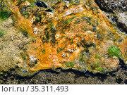 Barros de Chaño (Las Cuevas) hot springs. Colony of bacteria detail... Стоковое фото, фотограф J M Barres / age Fotostock / Фотобанк Лори