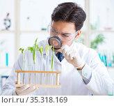 Male biochemist working in the lab on plants. Стоковое фото, фотограф Elnur / Фотобанк Лори
