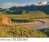 Horseshoe Bend of the Salt River with Saguaro cacti (Carnegiea gigantea... Стоковое фото, фотограф Jack Dykinga / Nature Picture Library / Фотобанк Лори