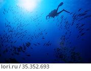 Diver silhouette swim in the middle of fish school. Стоковое фото, фотограф Сергей Новиков / Фотобанк Лори
