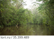 Kourou River flowing through forest, Crique Cariacou, French Guiana. 2015. Стоковое фото, фотограф Pascal Kobeh / Nature Picture Library / Фотобанк Лори