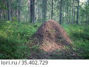 Муравейник в лесу. Стоковое фото, фотограф Литвяк Игорь / Фотобанк Лори