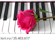 Beautiful bright pink rose on musical piano keyboard. Moscow, Russia. Стоковое фото, фотограф Валерия Попова / Фотобанк Лори