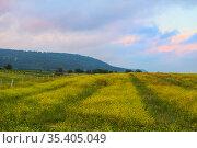 Rapeseed field in the highlands. Стоковое фото, фотограф Юрий Бизгаймер / Фотобанк Лори