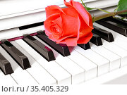 Beautiful red rose on grand piano keyboard. Moscow, Russia. Стоковое фото, фотограф Валерия Попова / Фотобанк Лори