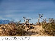 Scenic views of an American Desert. Стоковое фото, фотограф Zoonar.com/Walter G Arce Sr Grindstone Media Group / easy Fotostock / Фотобанк Лори