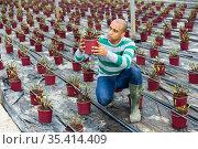 Latin american farmer inspects an ornamental shrub that has recently sprung young shoots. Стоковое фото, фотограф Яков Филимонов / Фотобанк Лори